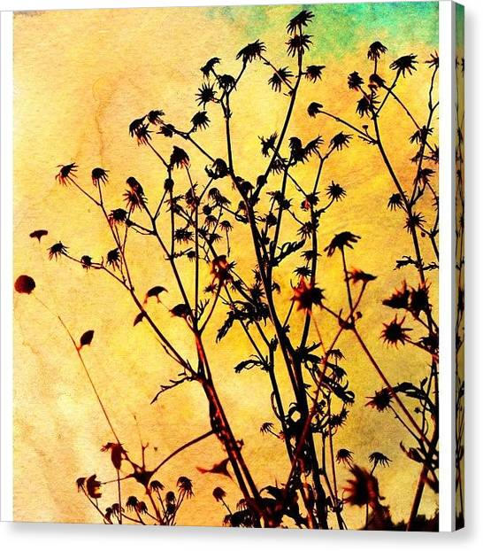 Storks Canvas Print - I'm In Love With The Dried Out Nature by Melanie Stork