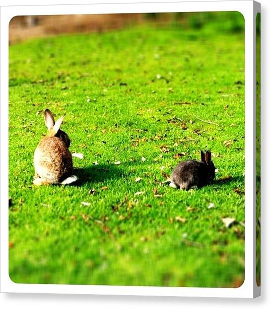 Rabbits Canvas Print - I'm Not Going Far, Mama!! Geez!! by S Michelle Reese