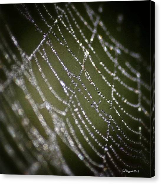 Spider Web Canvas Print - I'm Outta Here Before He Gets Back😝 by Phil Martin