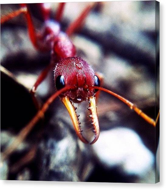Teeth Canvas Print - Im Sorry Mr Ant, But Your Face Doesn't by Brett Starr