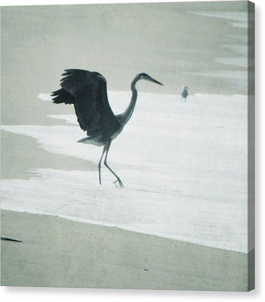 Herons Canvas Print - Image Created With #snapseed by Tammy List