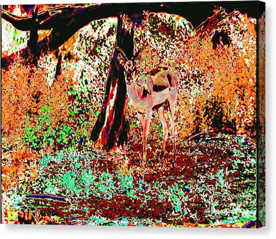Impala In The Forest Canvas Print