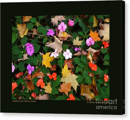 Impatiens And Autumn Leaves Canvas Print
