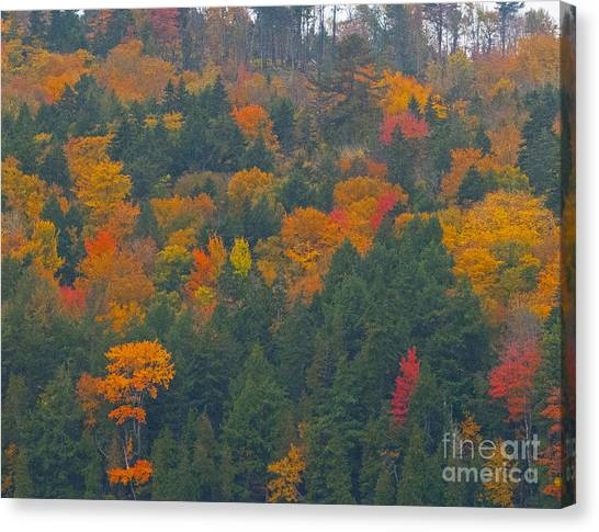 Imprssions Of Autumn Canvas Print by Charles  Ridgway