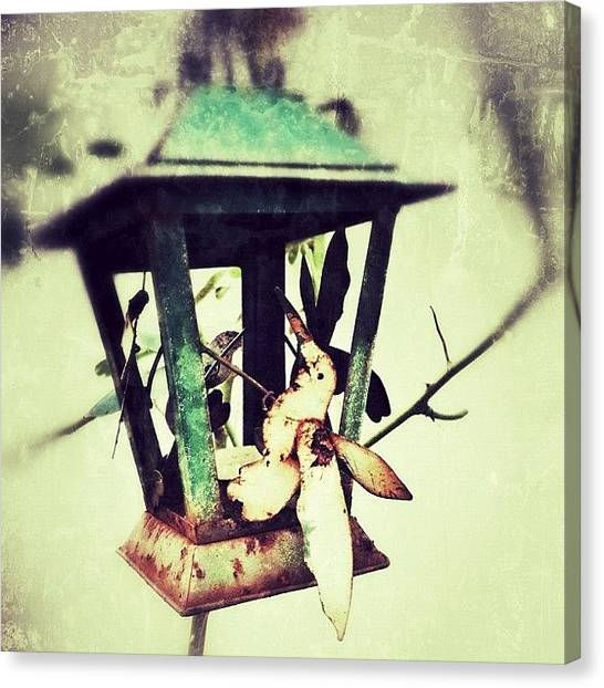 Hummingbirds Canvas Print - In A Little Corner Of The Garden by Mommy Inkwell