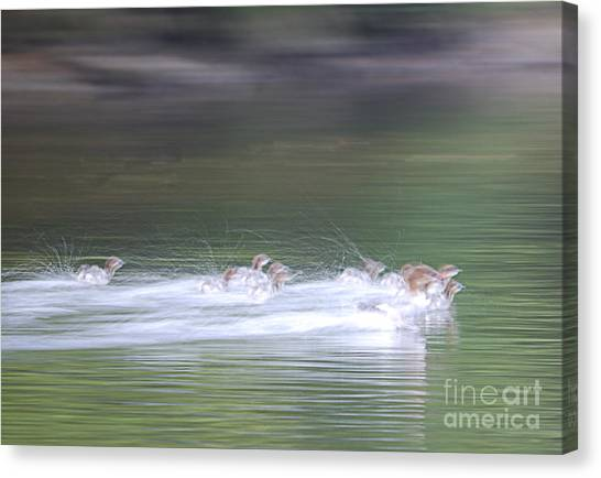 In Action Canvas Print