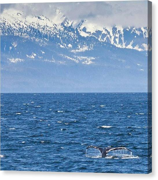 Whales Canvas Print - In Color This Time. Whale Watching In by Carlos Caceres