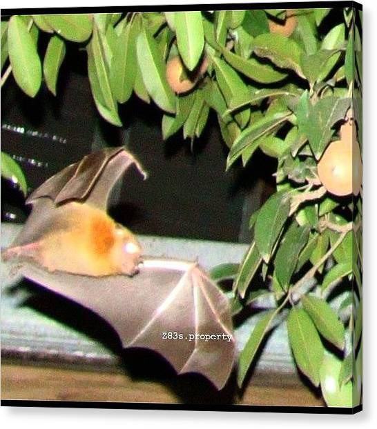 Bat Canvas Print - In Front Of #villasis Home In by Zyrus Zarate