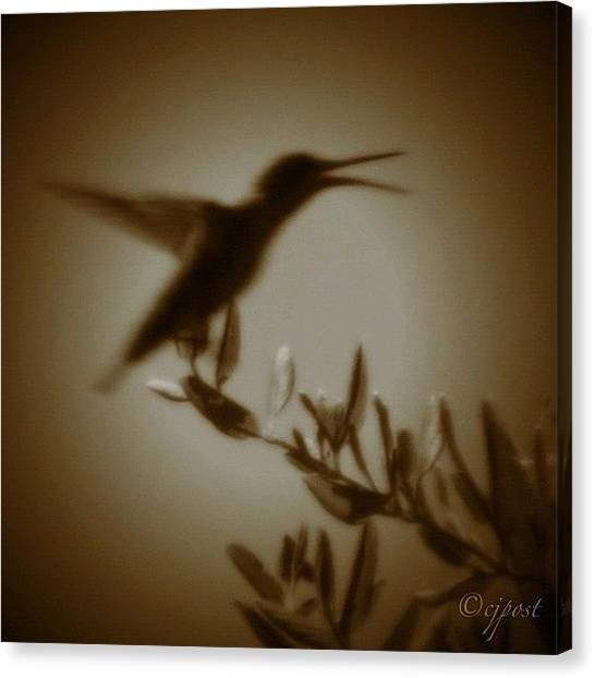 Hummingbirds Canvas Print - In My Dream A Hummingbird Talks To Me by Cynthia Post