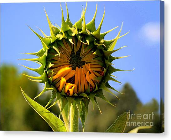Gaston County Canvas Print - In The Beginning  by Tammy Cantrell