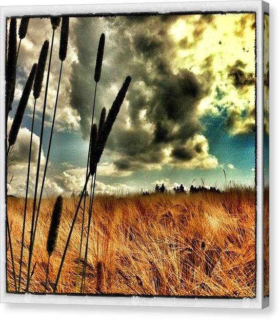 Swiss Canvas Print - In The Field by Urs Steiner