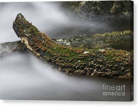 In The Flow Canvas Print by David Waldrop