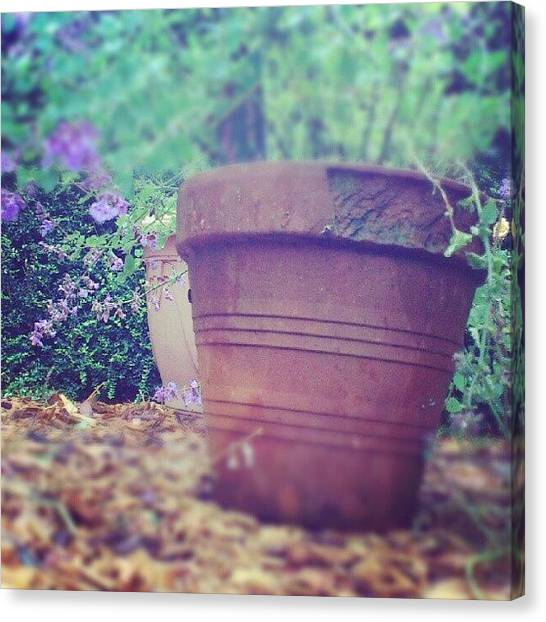 Decorative Canvas Print - In The Garden by Lesley Power