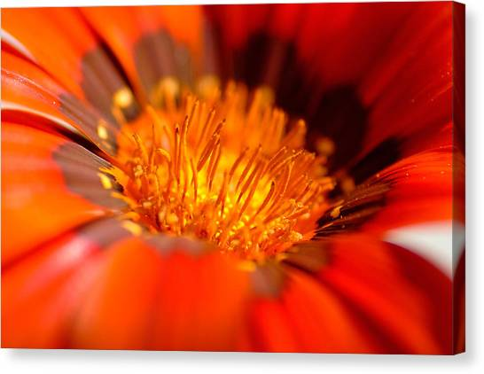 In The Heart Of Flower Canvas Print