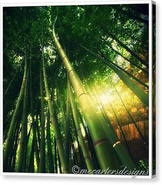 Bamboo Canvas Print - In The Thick Of It. #jj_forum_0411 #jj by Mary Carter