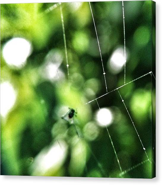 Spiders Canvas Print - In The Trap  by Melanie Stork