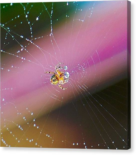 Spider Web Canvas Print - Incey Wincey by Colin Mccoy