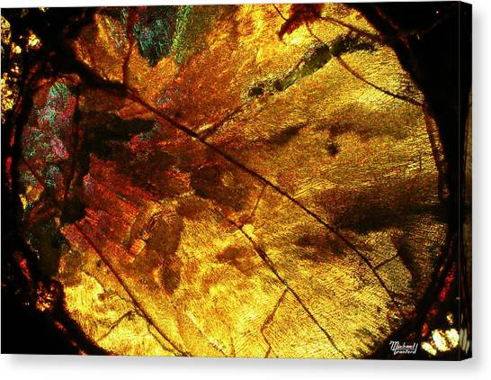 Indian Fall  Canvas Print