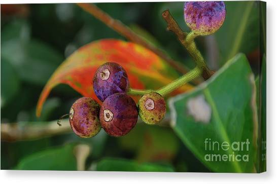 Indian Hawthorne Canvas Print