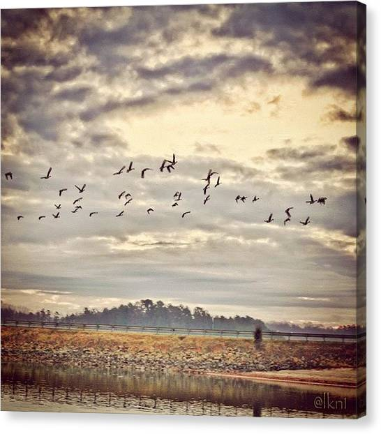 Geese Canvas Print - Inflight.. Another From Last by Margie P
