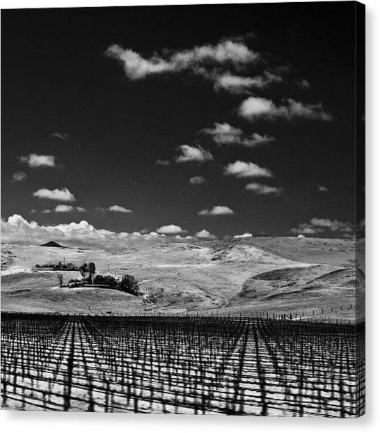 Vineyard Canvas Print - #infrared #photography #vineyard by Michael Amos