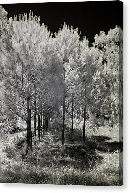 Infrared Trees Canvas Print by Stavros Argyropoulos