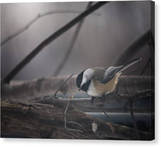 Chickadees Canvas Print - Inquisitive by Susan Capuano