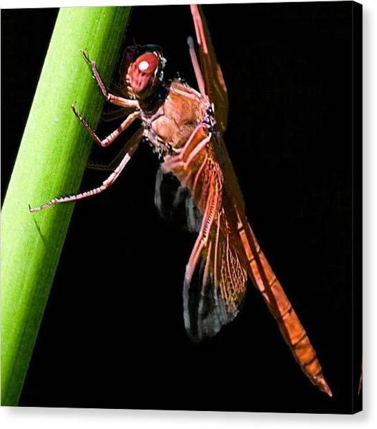 Outer Space Canvas Print - #insect #bug #dragonfly #dragon #fly by Michael Lynch