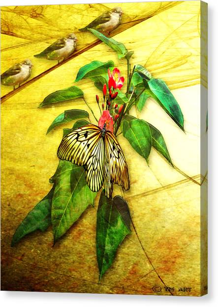 Insect - Butterfly - Sparrow - Happy Summer  Canvas Print