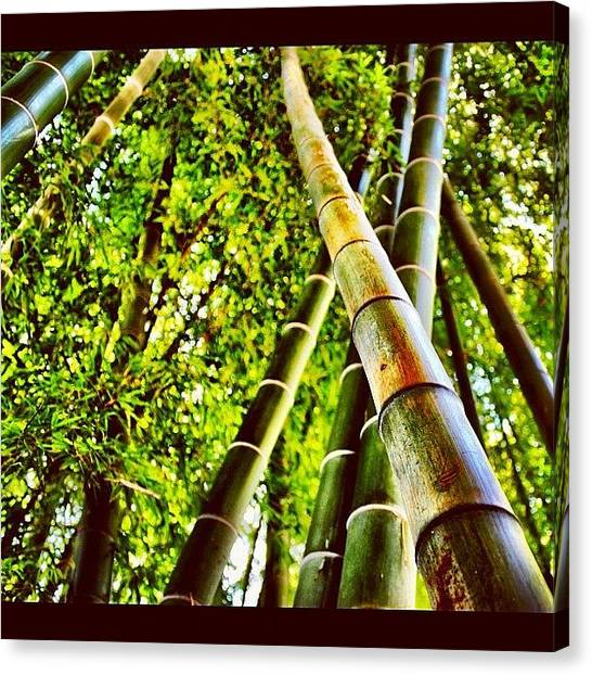 Bamboo Canvas Print - Inside The Bamboo Garden In Camp Zama by Julianna Rivera-Perruccio