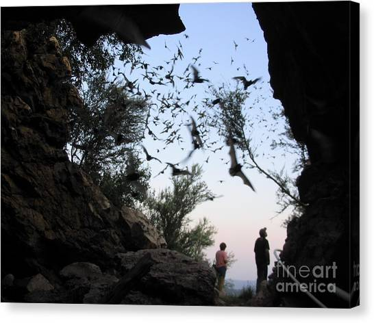 Inside The Bat Cave Canvas Print