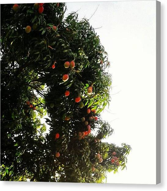 Mango Tree Canvas Print - Inspirado En @giancagon #mango Pa To' by Gustavo Nieto