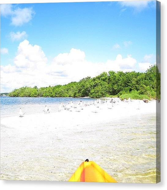 Indians Canvas Print - #instabird #sandbar #island #indian by Michael Hughes