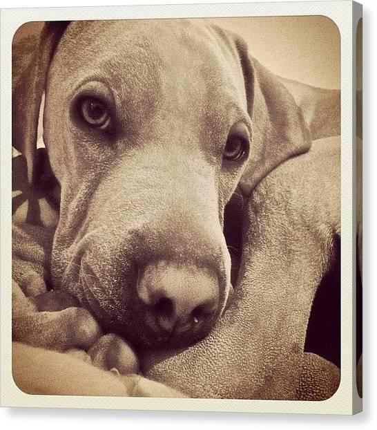 Lounge Canvas Print - #instadog #dogs #instamood #instagood by Sophie Tico
