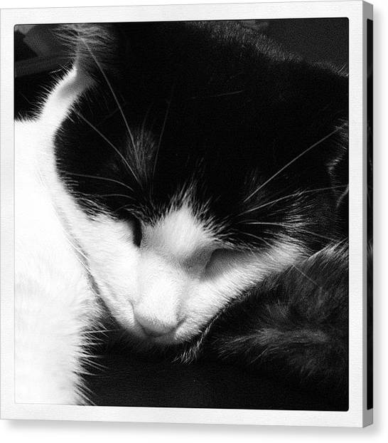 Kittens Canvas Print - #instagood #catstagram #cataofinstagram by Rachel Williams