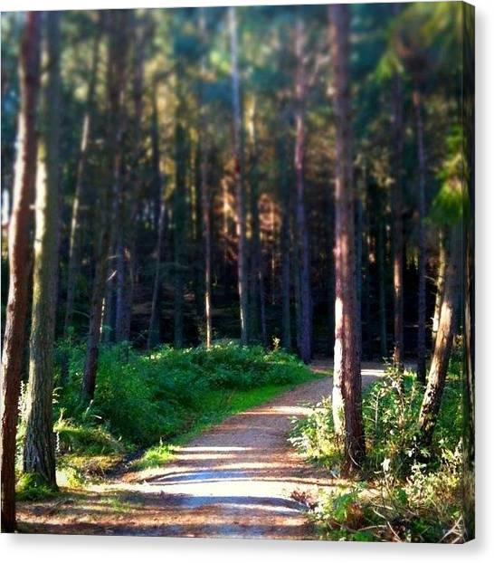 Forest Paths Canvas Print - Instagram Photo by Christian Lund