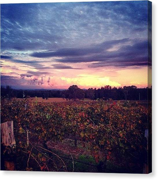 Vineyard Canvas Print - Instagram Photo by Sandra Kempe
