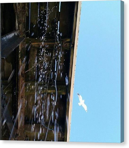 Seagulls Canvas Print - #instagram #photos, #just #where #do by Kevin Zoller