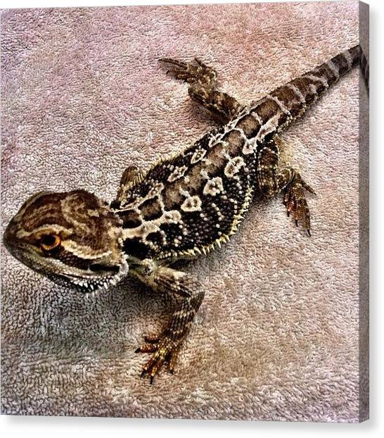 Lizards Canvas Print - Instagram Tags  #ig #igers by Victor Wong