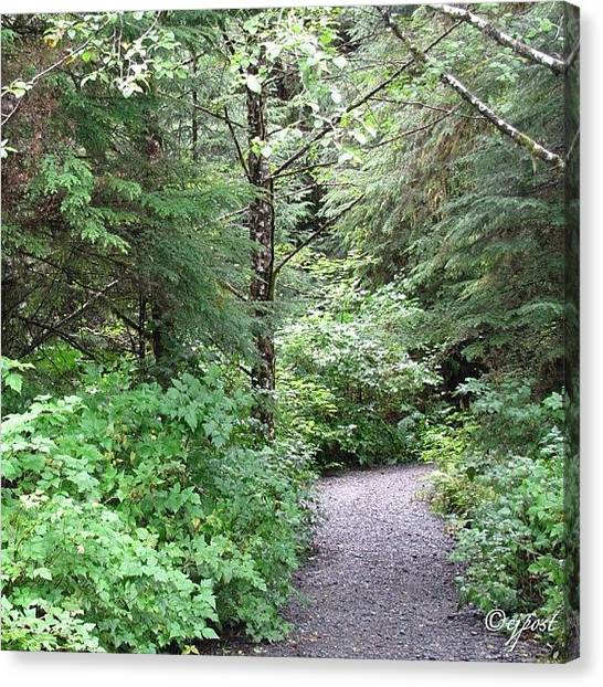 Forest Paths Canvas Print - Into The Rainforest 1of5 Sept 4 by Cynthia Post