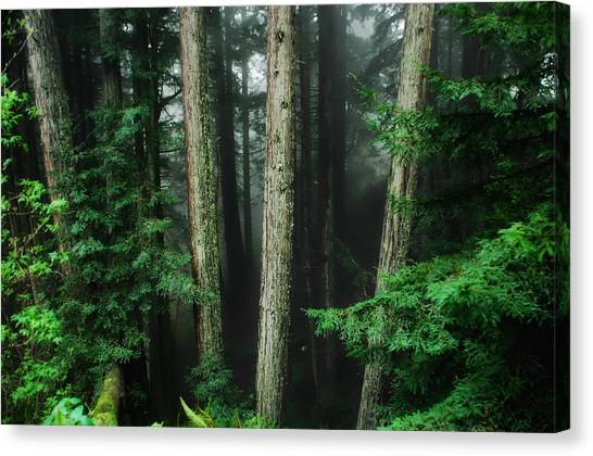 Redwood Forest Canvas Print - Into The Wild by Donna Blackhall