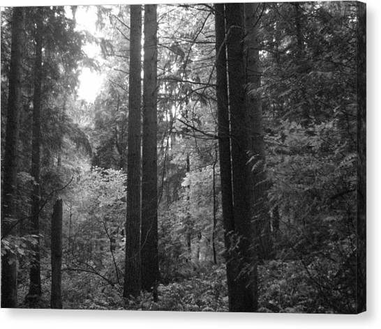 Into The Wood Canvas Print