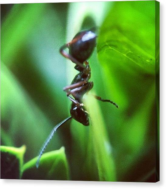 Ants Canvas Print - #iphoneography #picoftheday by Sooonism Heng