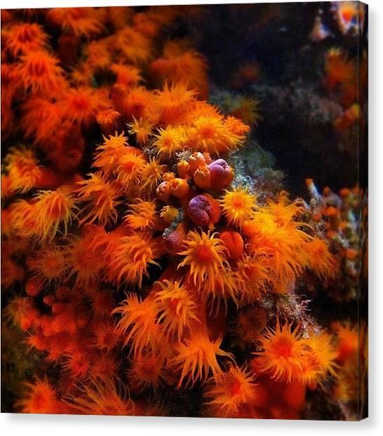 Aquariums Canvas Print - #iphonepic #iphonephotography #orange by Daniel Corson