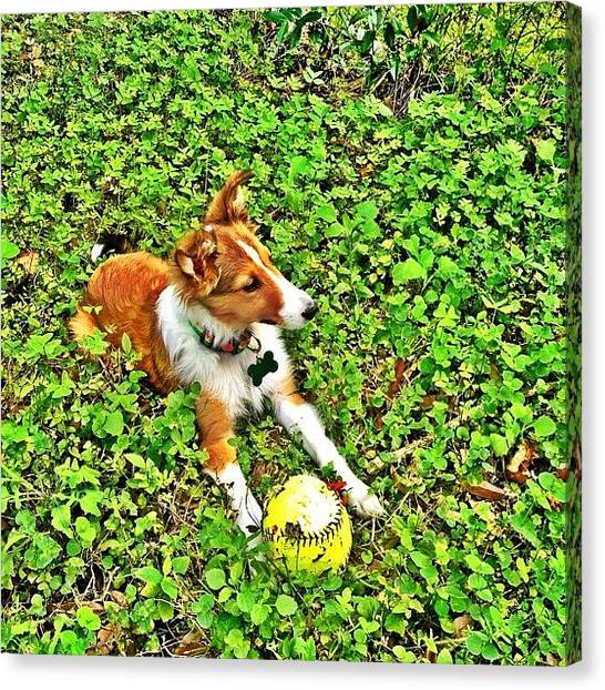 Softball Canvas Print - #iphonesia #jj_forum #jj #popular by Matt Turner