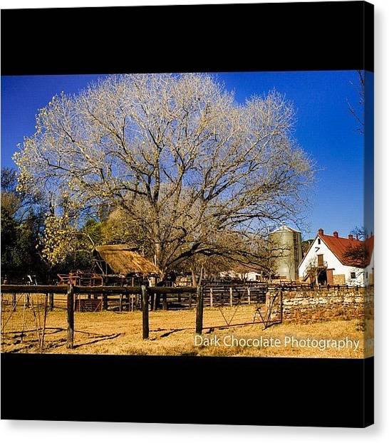 South Africa Canvas Print - Irene Farm, Pretoria, Johannesburg by Zachary Voo