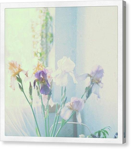 Irises Canvas Print - #iris #bouquet From Some Time Ago by Alexandra Cook