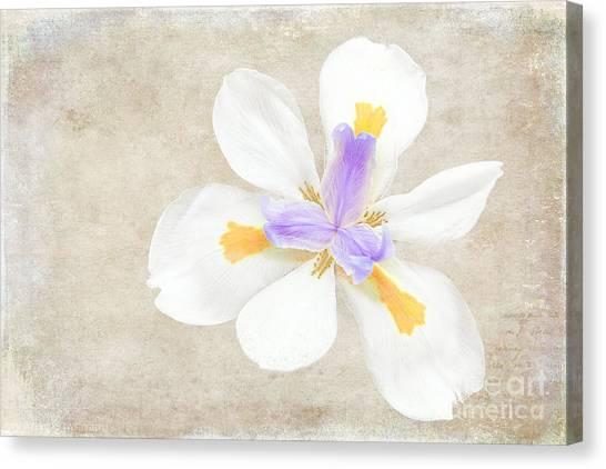 Iris Calling Canvas Print