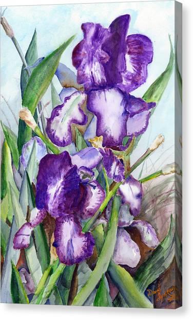 Iris Eyes Canvas Print by David Ignaszewski