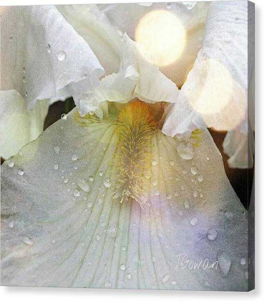 Wet Canvas Print - #iris #flower #whiteflowers #white by Jess Gowan